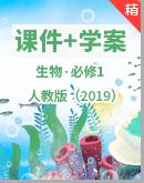 【高效备课】生物人教版(2019)必修1同步课件+学案