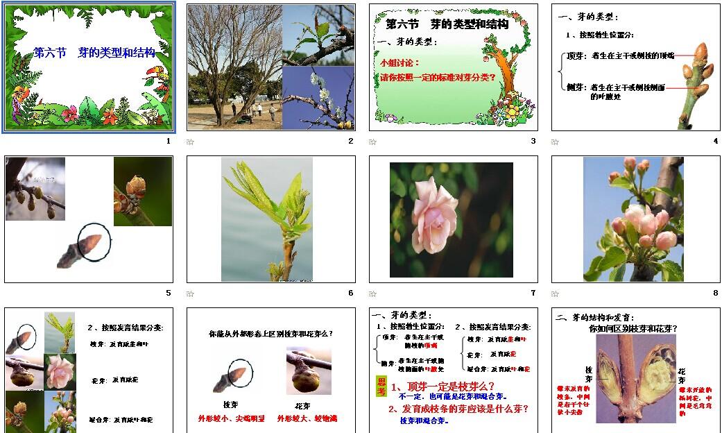 济南版生物|初中初中,课件课件下载_21故事的课件令人感动450生物图片