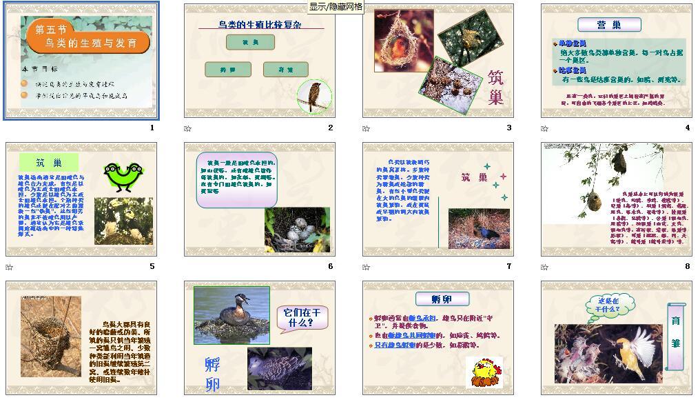苏教版初中|生物生物,课件课件下载_21初中时事政治4月10的月到课件图片