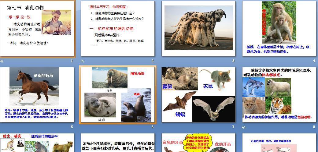 八年级哺乳动物ppt_