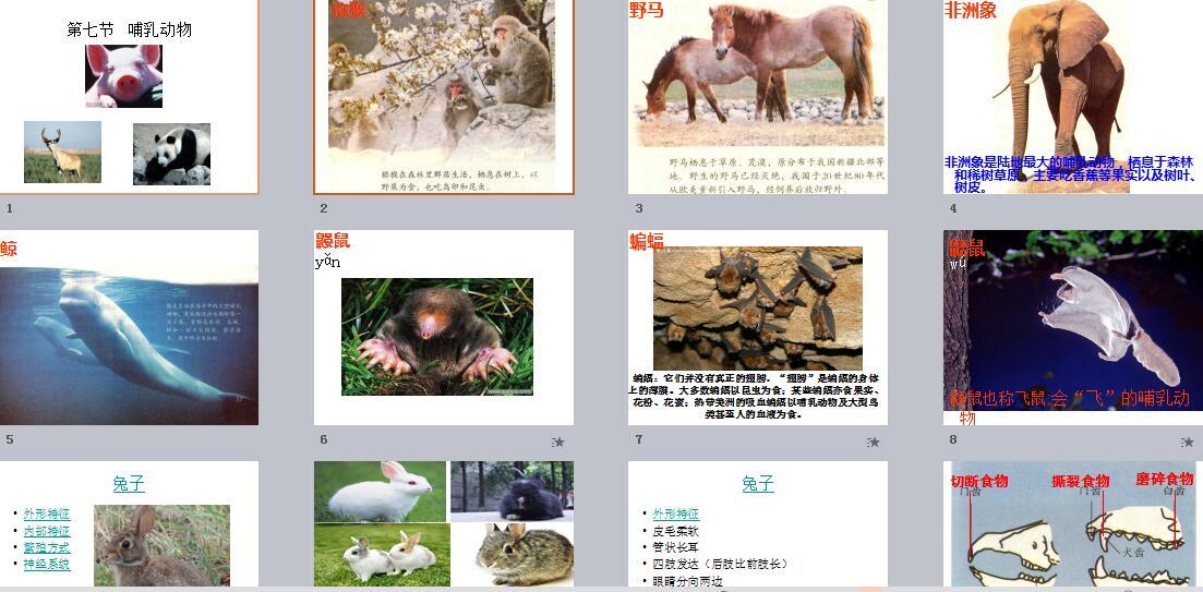 八年级哺乳动物ppt_八年级生物_哺乳动物要点ppt